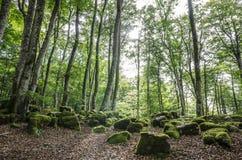 paysage dans le pays Basque image libre de droits
