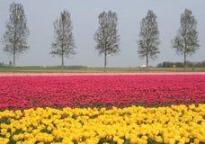Paysage dans le polder Image stock