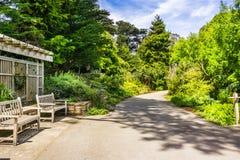 Paysage dans le San Francisco Botanical Garden image libre de droits