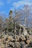Paysage dans le taiga de montagne Images libres de droits