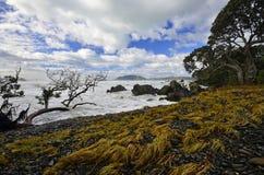 Paysage de baie de Waihau photographie stock