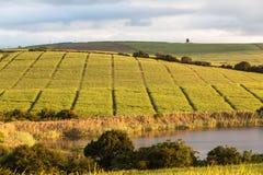 Paysage de barrage de canne à sucre de terres cultivables image stock