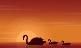 Paysage de beauté de cygne sur des silhouettes de lac Photographie stock libre de droits