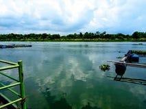 Paysage de beaux marais reflétant des arbres et des cieux bleus images libres de droits