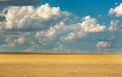 Paysage de blé de champ de jaune de ferme sur le ciel bleu avec des nuages Photo libre de droits