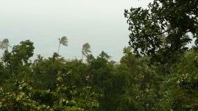 Paysage de bord de la mer pendant l'ouragan de catastrophe naturelle Le vent fort de cyclone balance des palmiers de noix de coco clips vidéos