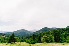 Paysage de brouillard de Forest With Evergreen Trees In de montagne carpathienne Images stock