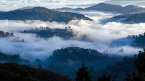 Paysage de brouillard de matin dans les montagnes de forêt, timelapse de Sri Lanka clips vidéos