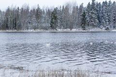 Paysage de calme d'hiver sur une rivière avec cygnes blancs La Finlande, rivière Kymijoki photos stock