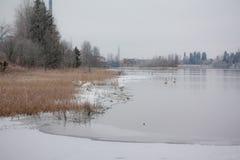 Paysage de calme d'hiver sur une rivière avec cygnes blancs sur la glace La Finlande, rivière Kymijoki image stock