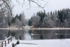 Paysage de calme d'hiver sur une rivière avec cygnes et pilier blancs La Finlande, rivière Kymijoki images libres de droits