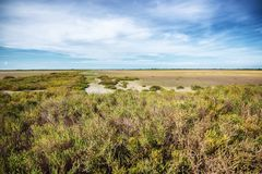 Paysage de Camargue Photos stock