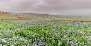 Paysage de campagne en Suisse avec les champs pourpres de wildflower et village de champ de ferme et idyllique coloré dans les te photographie stock libre de droits