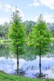 Paysage de campus d'USF : arbre dans l'eau Photos stock