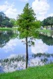 Paysage de campus d'USF : lac et arbre Photo stock