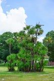 Paysage de campus d'USF : palmier Photographie stock