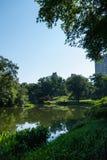 Paysage de Central Park Photographie stock