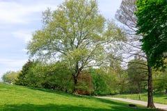 Paysage de Central Park au ressort dans NYC Photographie stock libre de droits