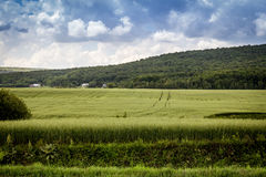 Paysage de champ d'avoine Photographie stock libre de droits