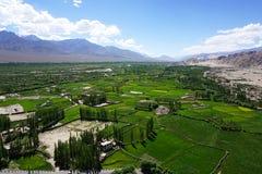 Paysage de champ dans Leh Ladakh, Inde Photographie stock libre de droits