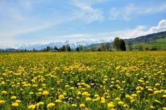 Paysage de champ suisse d'été Photo stock