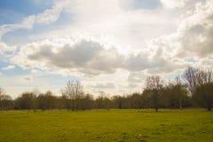 Paysage de paysage de champ de vert d'été de ressort Images libres de droits