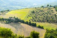 Paysage de chianti près de Radda, avec des cyprès et des oliviers photographie stock libre de droits