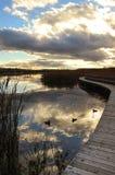 Paysage de chute avec des canards Photos stock
