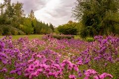 Paysage de chute avec des fleurs images stock