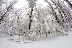 Paysage de chute de neige en parc Effets de lentille de Fisheye photo stock