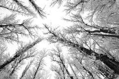Paysage de chute de neige en parc Effets de lentille de Fisheye image libre de droits