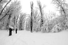 Paysage de chute de neige en parc Effets de lentille de Fisheye photographie stock