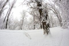 Paysage de chute de neige en parc Effets de lentille de Fisheye image stock
