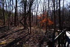 Paysage de chute en parc du Missouri le long d'itinéraire aménagé pour amateurs de la nature Images libres de droits