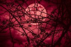 Paysage de ciel avec la lune superbe derrière la silhouette de la branche d'arbre image stock
