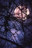 Paysage de ciel avec la lune superbe derrière la silhouette de la branche d'arbre photos libres de droits
