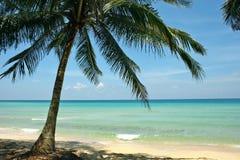 Paysage de ciel de palmier de sable de Coral Sea Tropical Wild Beach photo libre de droits