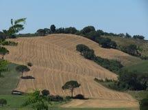 Paysage de collines de Chiantishire Image stock