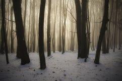 Paysage de conte de fées d'hiver dans la forêt le jour de Noël photographie stock libre de droits