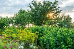 Paysage de coucher du soleil au printemps Images libres de droits