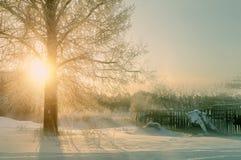 Paysage de coucher du soleil d'hiver avec les arbres d'hiver et les faisceaux givrés de lumière du soleil - scène de paysage d'hi Photographie stock