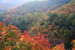 Paysage de couleur d'automne de forêt des feuilles changeant pendant l'automne en montagne photographie stock