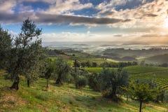 Paysage de début de la matinée en Toscane photographie stock