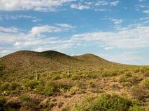 Paysage de désert Photographie stock