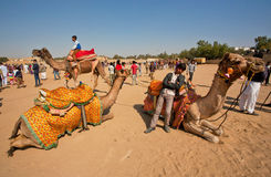 Paysage de désert avec la jeune détente de cameleer Photo stock