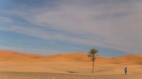 Paysage de désert avec la paume Photographie stock