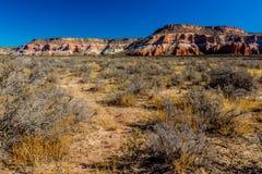 Paysage de désert avec les cieux bleus et les usines de désert en Arizona Photos libres de droits