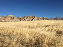 Paysage de désert de chute Photographie stock