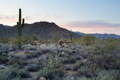 Paysage de désert de l'Arizona Photographie stock libre de droits
