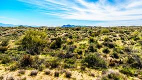 Paysage de désert de l'Arizona avec ses nombreux Saguaro et d'autres montagnes de cactus et éloignées Images stock